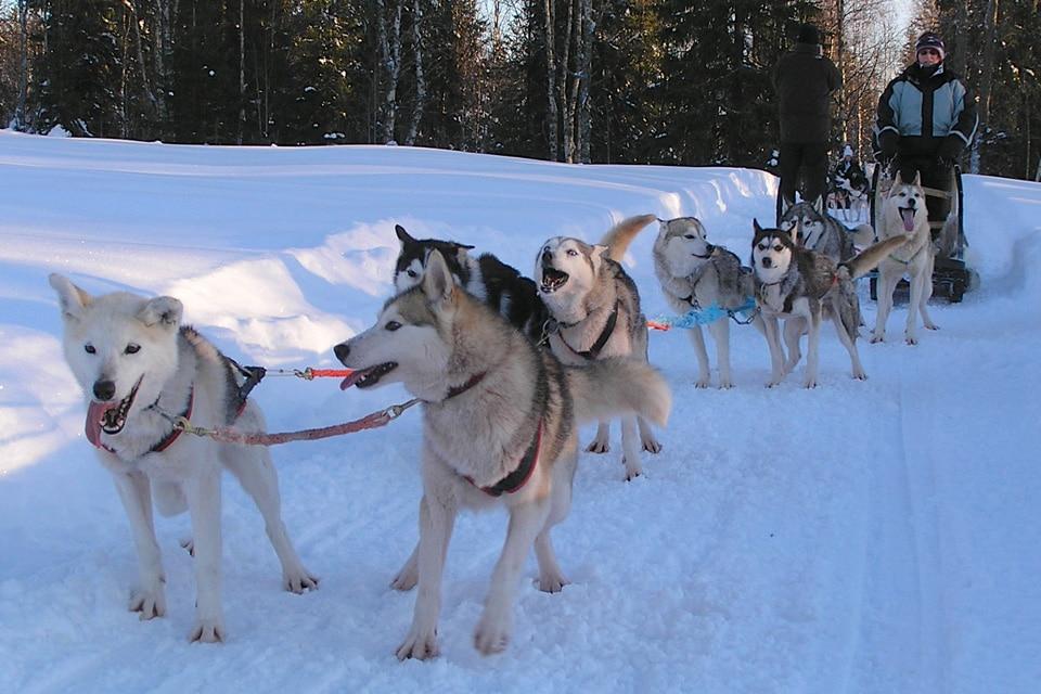 Huskies and Arctic Landscape
