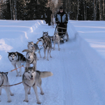 Husky Safari, Finnish Lapland