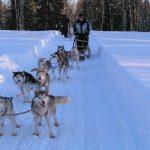 Sledding through snowy forest