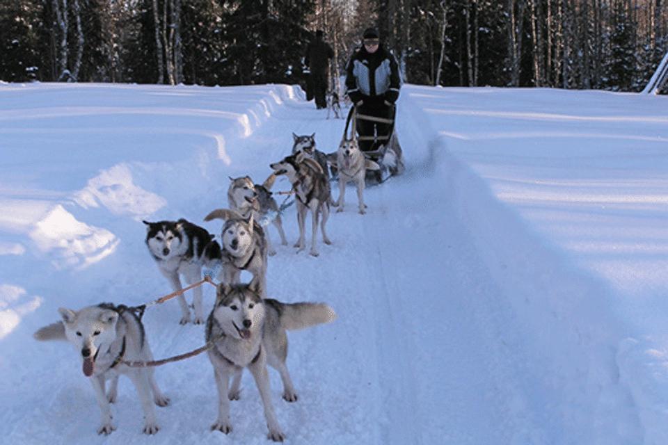 Husky Safari, Finnish Lapland