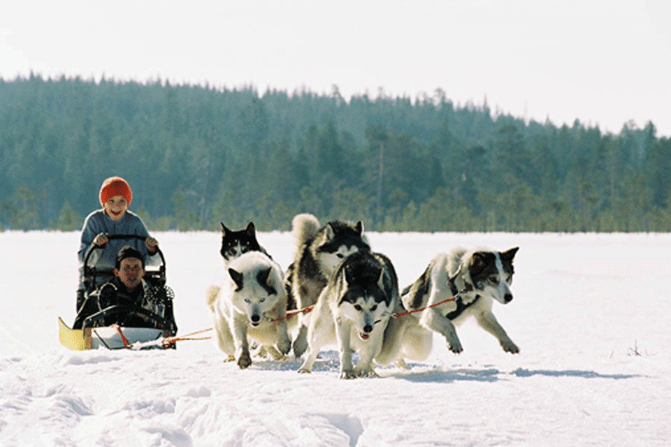 Husky Safari, Lapland