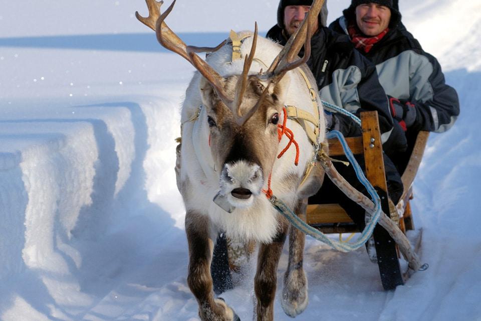 Reindeer Driving in Finnish Lapland
