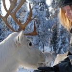 Feeding Reindeers, Finnish Lapland