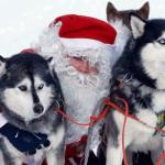 Santa Claus and Husky, Rovaniemi