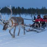 Reindeer Sleigh Ride in Finnish Lapland
