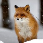 Lapland Tours in Ranua Wildlife Park